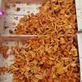 mushroom (2)