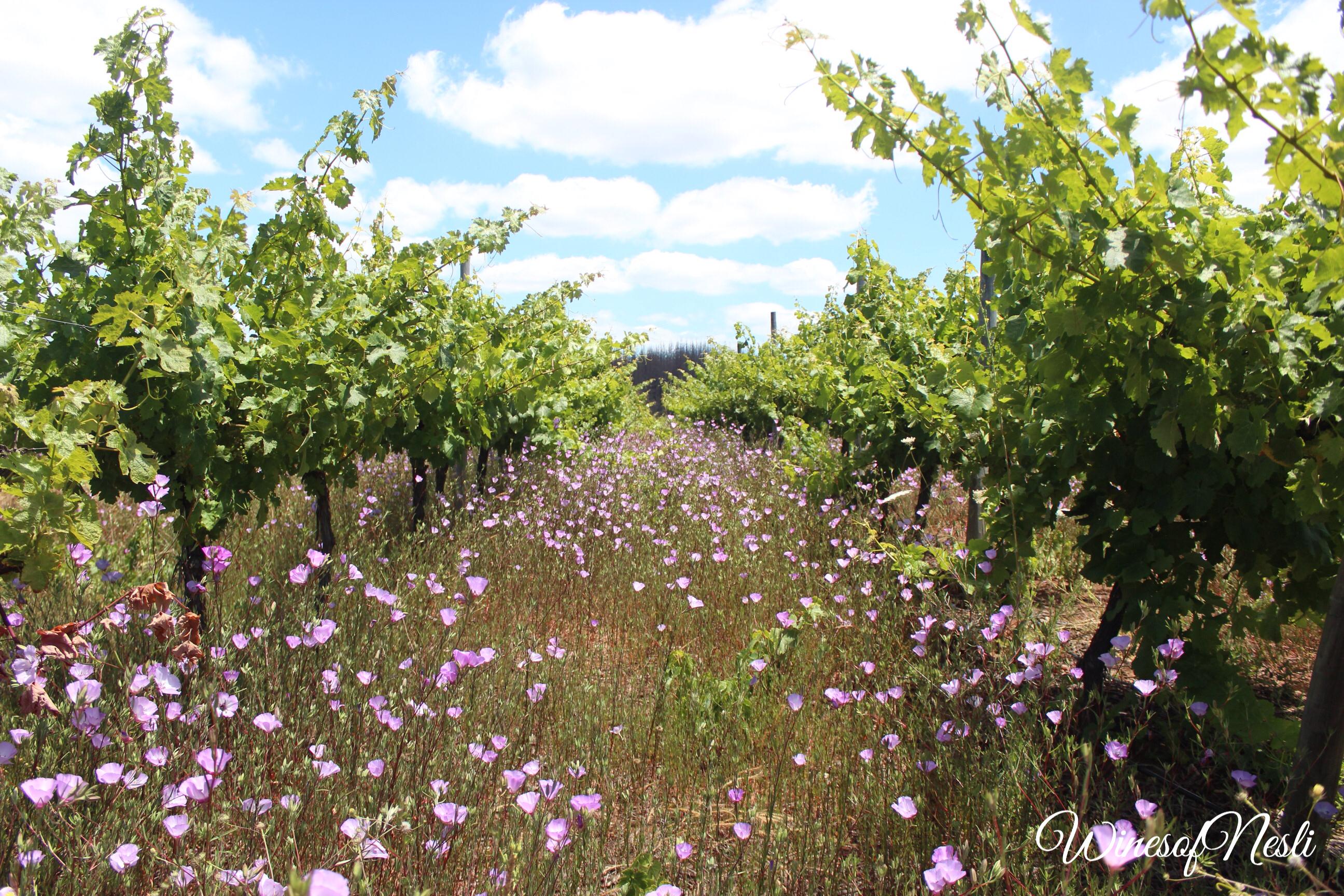 itata valley vineyards